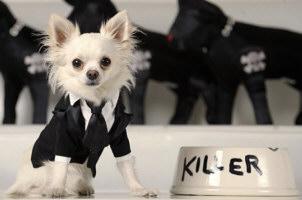 roupas para cachorros 2013